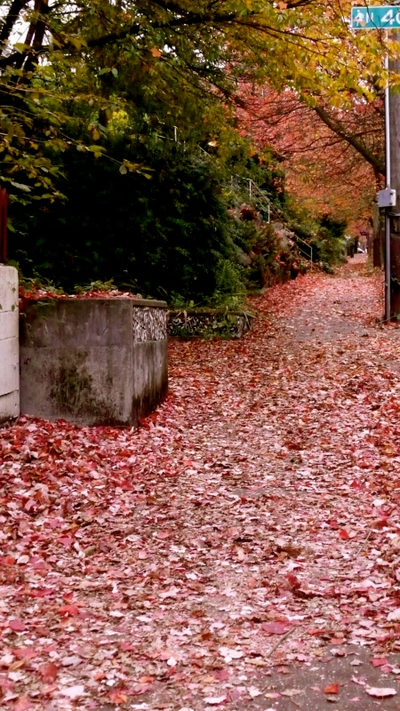 Sidewalk covered with leaves a month ago