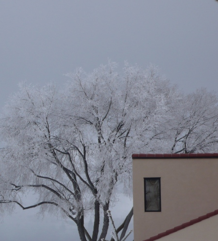 frosted tree against Lake Chelan