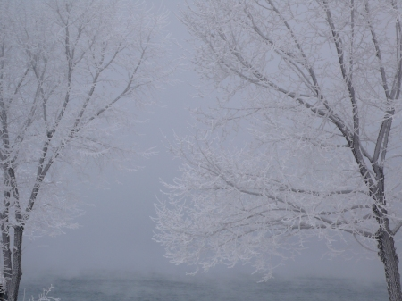 frost covered trees, Chelan, Washington