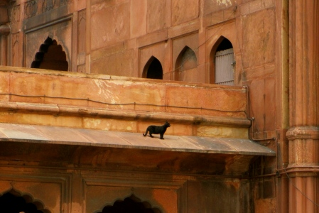 Rebecca first spotted this clever fellow at the main mosque in Delhi.  No dog would dare try to climb such heights, so kitty was safe!