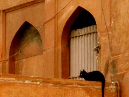 Close up: cat at mosque in Old Delhi