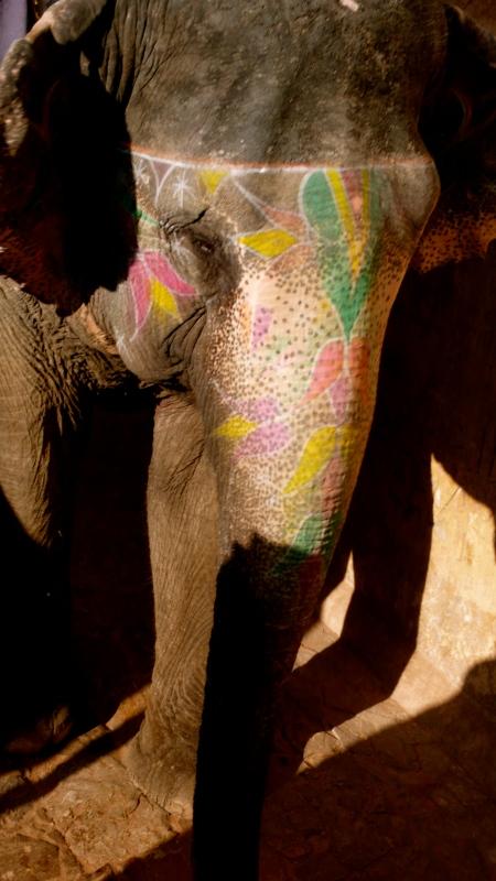 Elephant in Jaipur