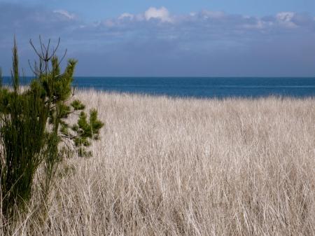 Beach Grass and Sea