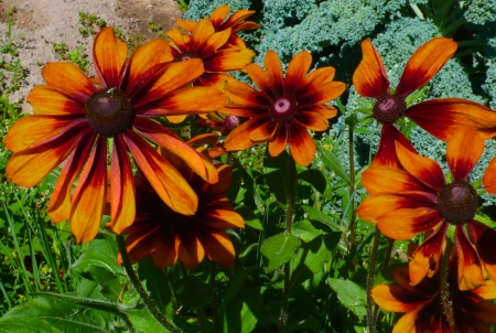 Stehekin Garden