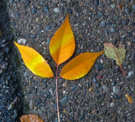 Streaked autumn leaf