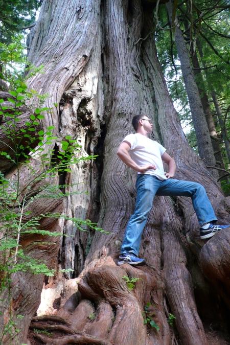 Among Giant Trees